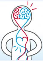 Journée cœur vaisseaux cerveau