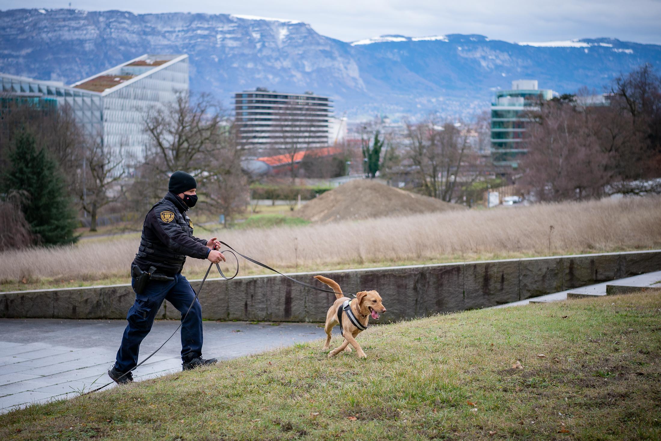 Un chien renifleur du Service de sécurité et de sûreté de l'Office des Nations Unies à Genève