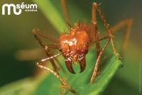 Gros plan d'une fourmi sur une feuille