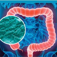 Nutrition and microbiota