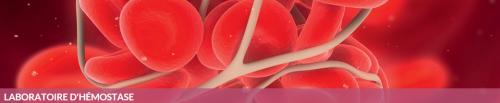 Site internet laboratoire d'hémostase