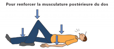renforcer la musculature posstérieure du dos