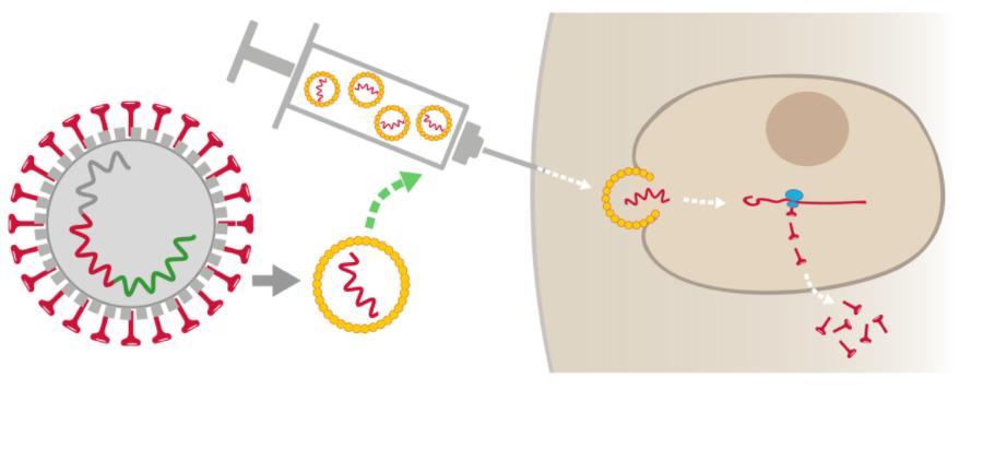 Vaccin ARN messager