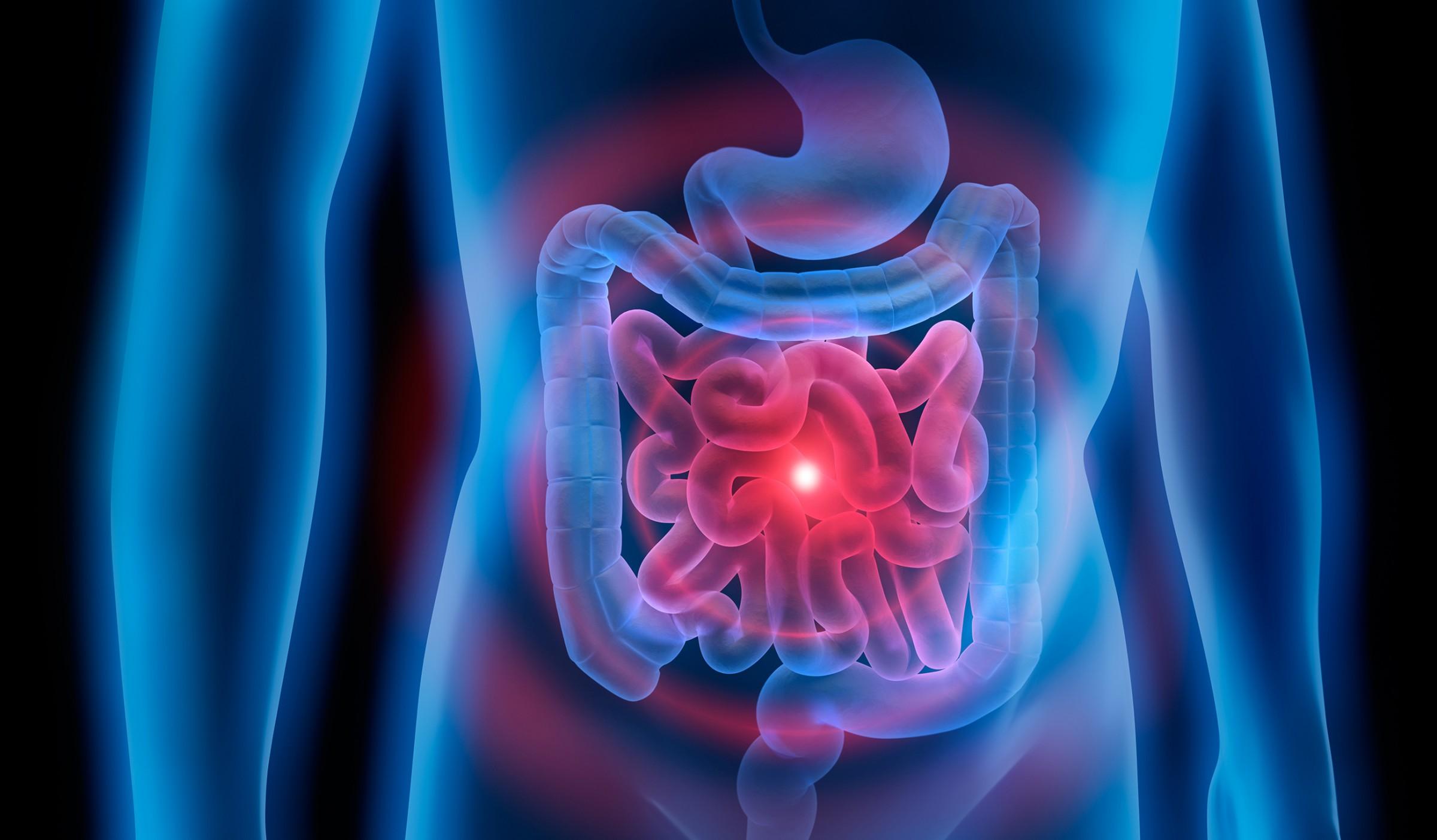 AMYBELLY : l'amyloïde, de l'intestin au cerveau