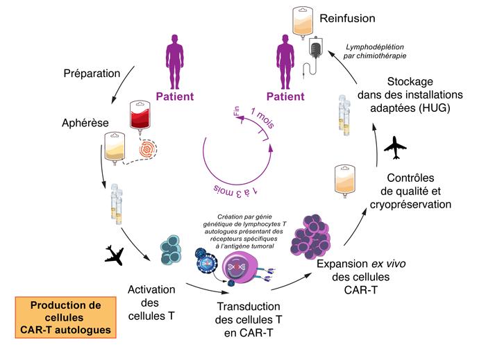 Immunoth cellulaire