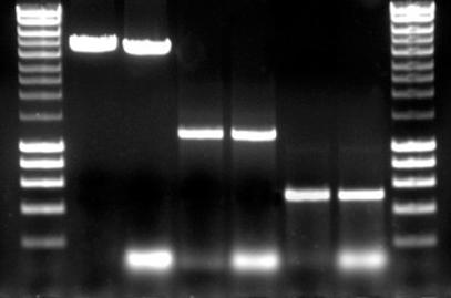 Méthode des PCR