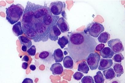Morphologie cellulaire