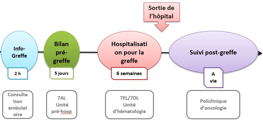 Etapes de la transplantation