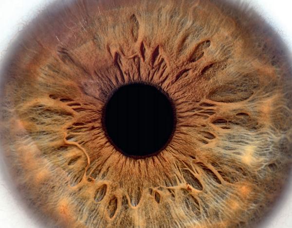 Brochure pour les patients : L'éviscération et l'énucléation oculaire