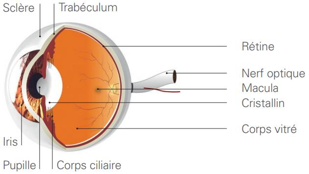 Maladies traitées au laser