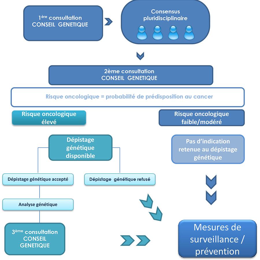 Parcours dans le programme oncogénetique